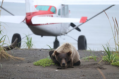 Grizzly&Plane.jpg