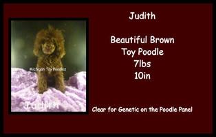 Judith - Poodle