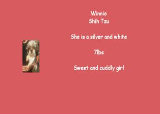 Winnie - Shih Tzu