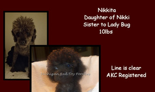 Nikkita - Poodle