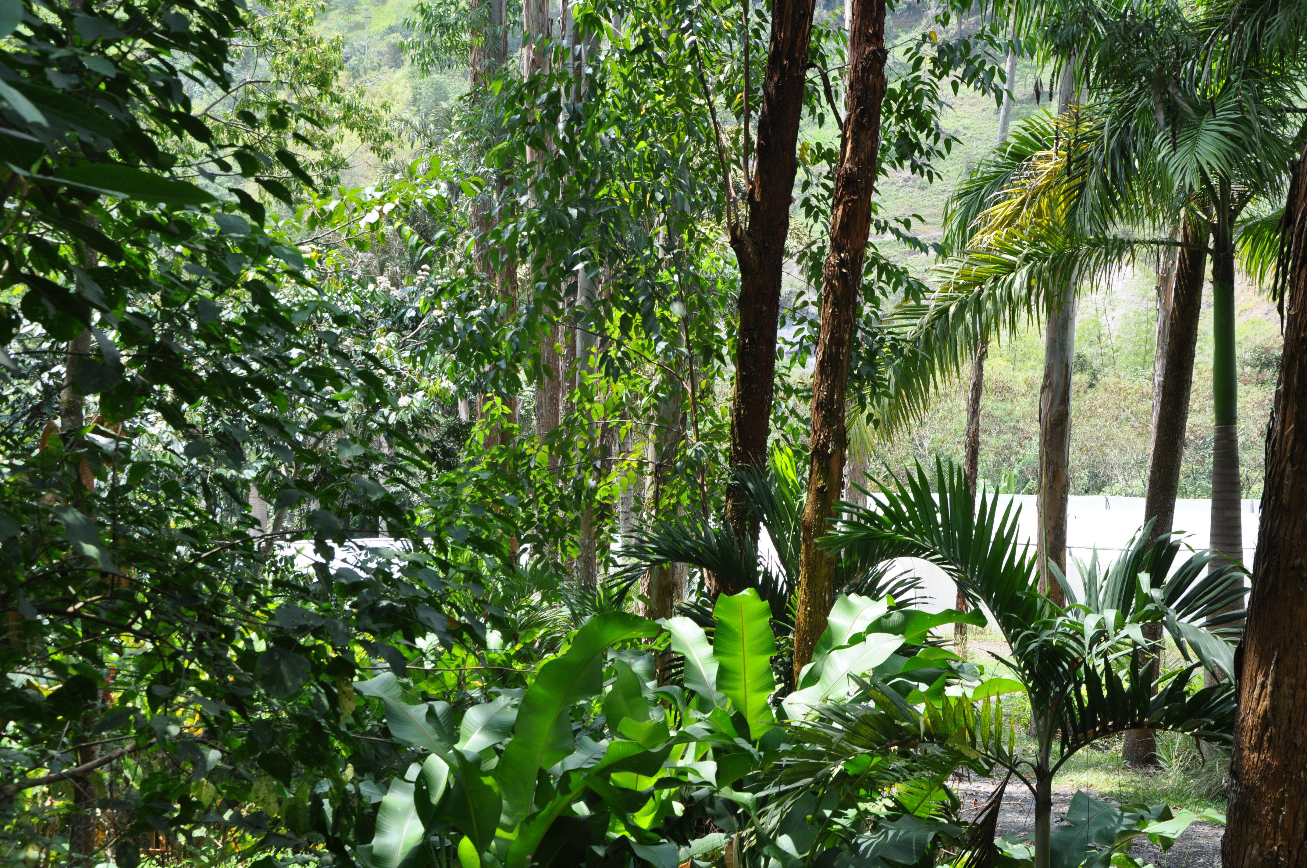Estación Productiva Bambusa