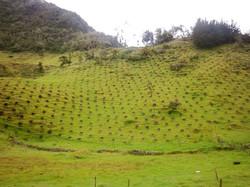 Etapa inicial plantación.