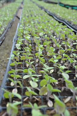 Material vegetal certificados domicilio