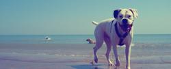 Pet friendly holidays at Shoal Bay