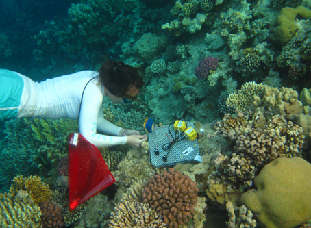 Local Lab: Is there still hope for our endangered coral reefs?