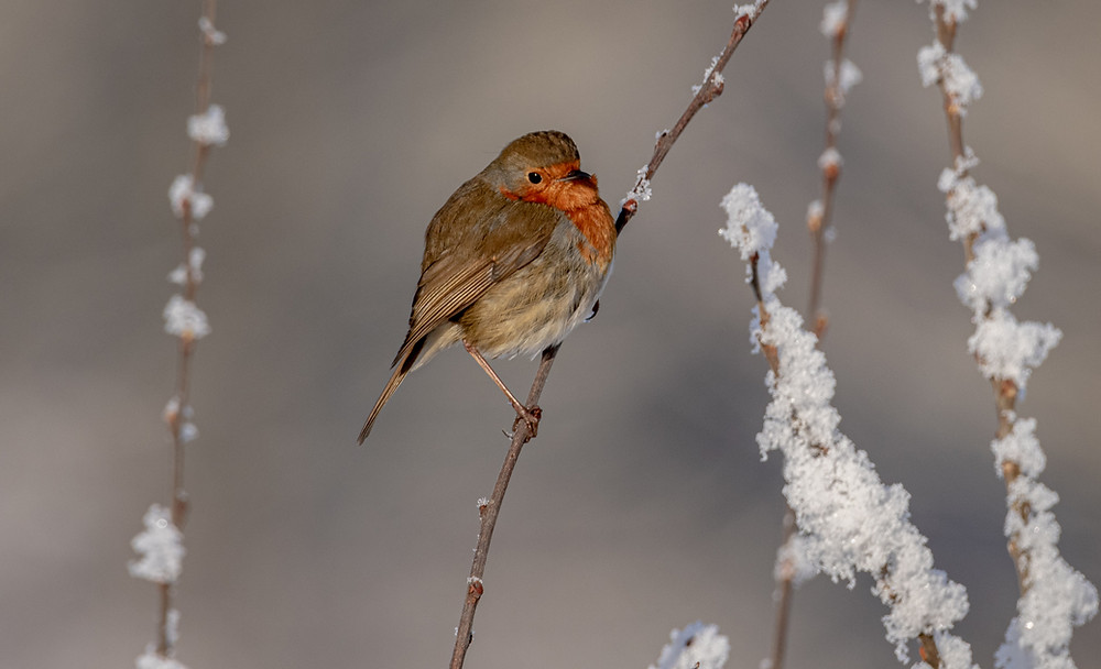 Robin, by Scottish Sisters Photography