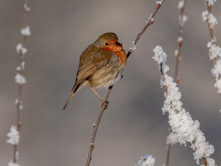 """""""Loved ones are near when robins appear"""""""