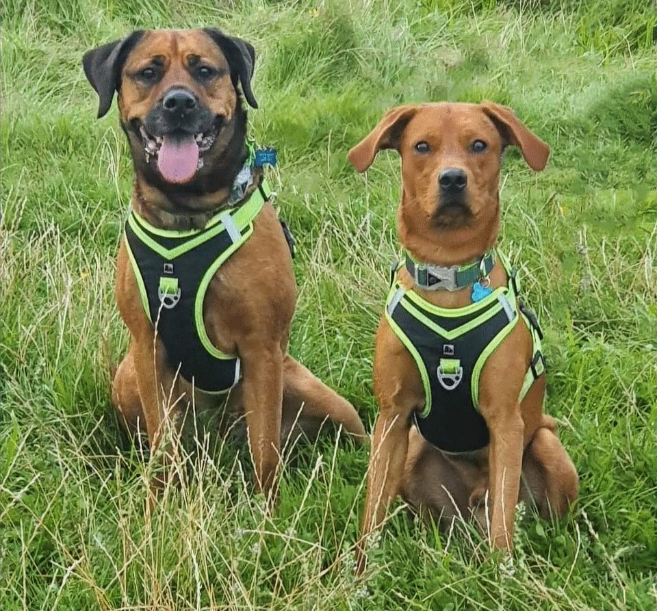 Hazel's dogs