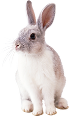 rabbit-2649157_1920.png