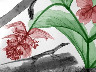 X-Ray Flora And Fauna Come Together As Art