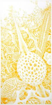 Photic Zone Yellows