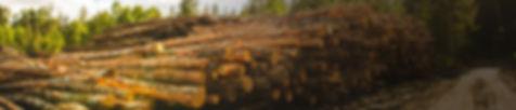 traeger-pellet-trees.jpg