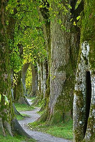 trees-2897757__340.jpg