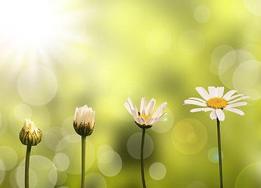 se_libérer_du_passé_fleurs.jpg
