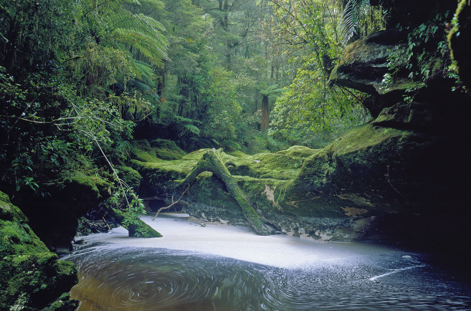 Waggon Creek, Paparoa National Park