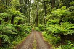 Rainforest, North Island