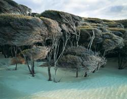 Windswept manuka, Mason Bay