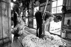 Blade shearing, Lake Heron Station