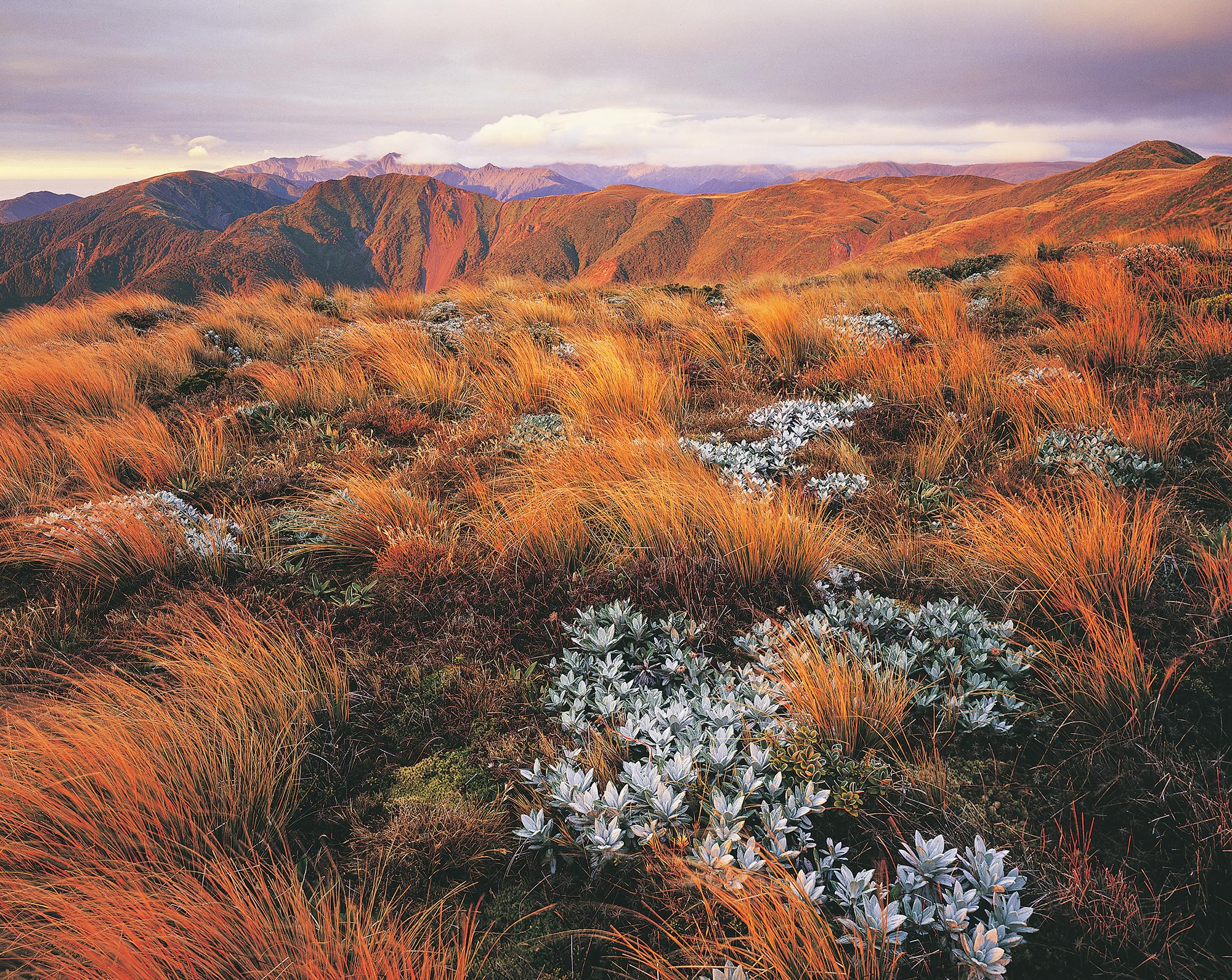 Papakiakuta Ridge, Ruahine Ranges