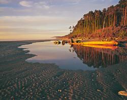 Coastal Rimu, Bruce Bay