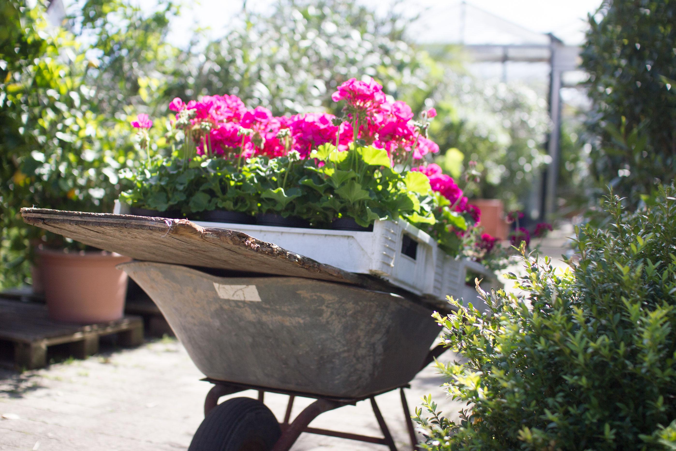 Impression aus der Gärtnerei