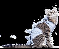 surgery-cat-cutout.png