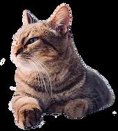 Cat-cutout.png