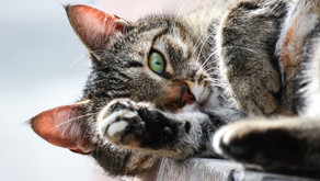 Why Won't Dr. Jaax Declaw?