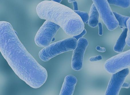 Study Probes Gut Microbiome Alterations, Probiotics in ALS Patients