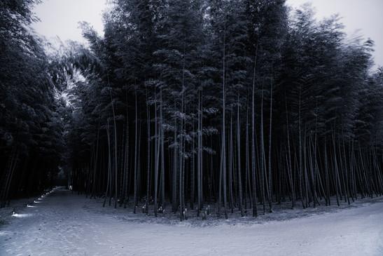 Japanese winter wonderland 3