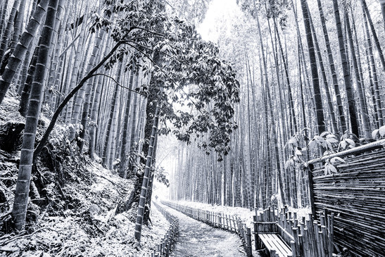 Japanese winter wonderland 1