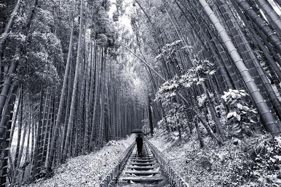 Japanese winter wonderland 2