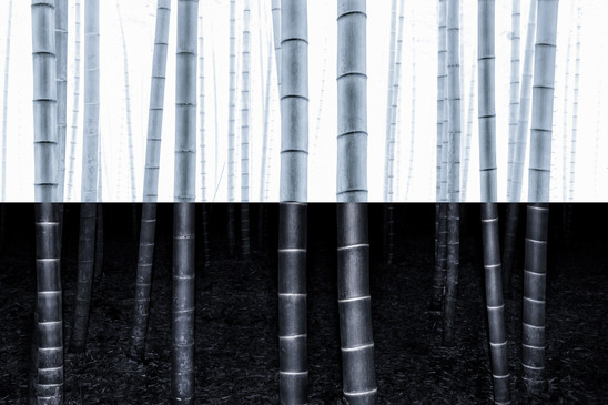 Yin-yang no.7.jpg