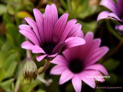 floresisla (8)