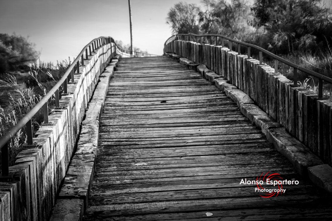 puenteisla (49)