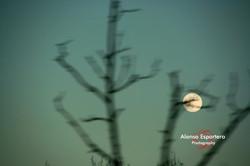 albendin nochevieja 2006 (436)