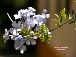 flores_3354