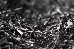 Cornstalk Residue - Spring 2019