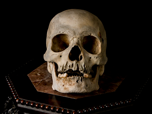 Human Skull #8383