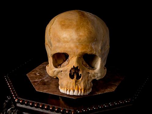 Human Skull #8266