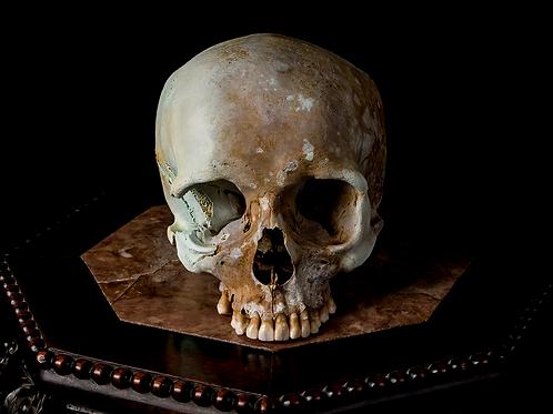 Human Skull #7268