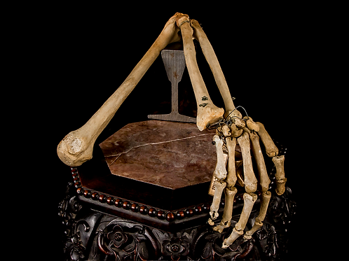 Articulated Human Arm