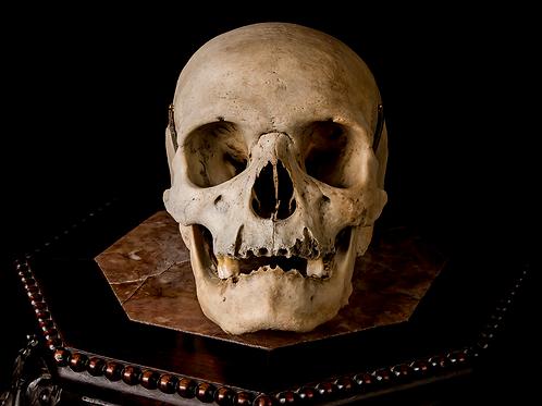 Human Skull #8390