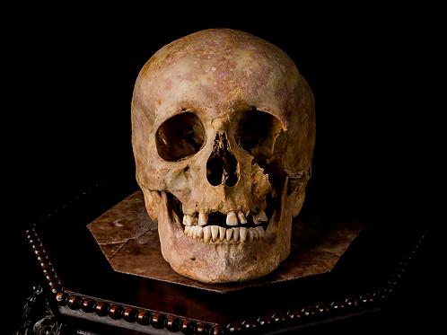 Human Skull #7339