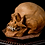 Thumbnail: Human Skull #8495