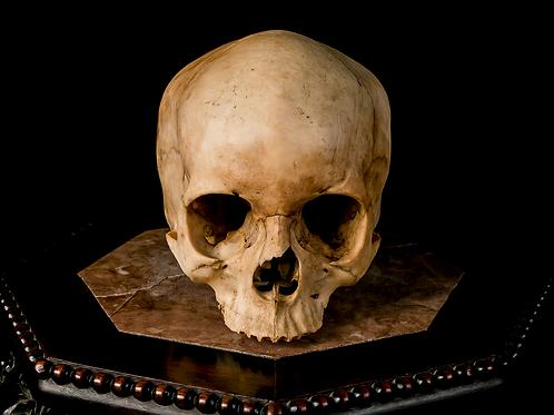 Human Skull #8489