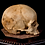 Thumbnail: Human Skull #8489