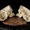 Thumbnail: Dissected Human Skull #9442