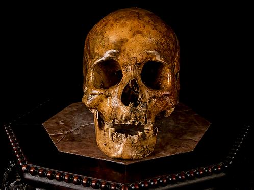 Human Skull #7463