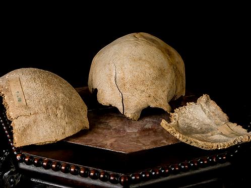 Skull Fragments, Ex-Museum
